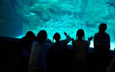 N.E.M.O. à l'Aquarium de Paris